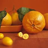 Oranges and Kumquats