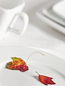 Autumn Leaves on White Plate