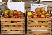 Weston Apples in Crates
