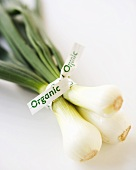 "Bunch of Organic Baby Vidalia Onions with ""Organic"" Twist Tie"