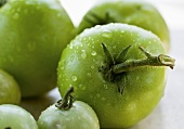 Wet Green Tomatoes
