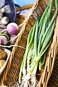 Fresh Scallions in a Basket; Farmer's Market