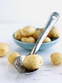Fresh Creamer Potatoes with Slotted Spoon