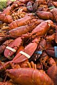 Whole Steamed Lobsters