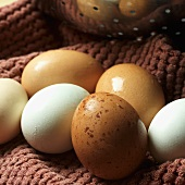 Fresh White and Brown Eggs from Iceberg Farms in New Jersey