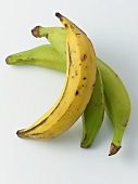 Yellow and Green Plantains