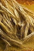 Viele Weizenähren