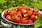 Colander of Fresh Picked Strawberries; Outside