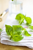 Basil Leaves on a Dish Towel