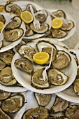 Many Plates of Oysters on the Half Shell with Lemon