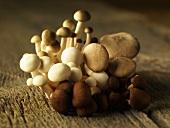 Assorted Asian mushrooms