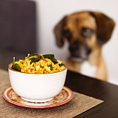 Bowl of Spiced Pumpkin Risotto with Raisins and Spinach; Puggle Dog in Background