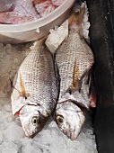 Fresh fish on a market stall