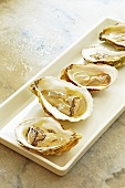 Fresh Atlantic oysters on a rectangular plate