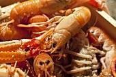 Whole Boiled Shrimp; Close Up