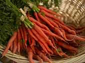 Bunches of Baby Carrots in a Basket at a Farmer's Market in Seattle Washington