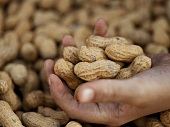 Hand Holding Peanuts at Farmer's Market in Seattle Washington