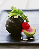 Three Types of Radish; Black, Watermelon and Red