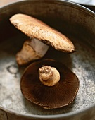 Two Portobello Mushrooms