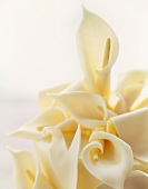 White Chocolate Calla Lilies