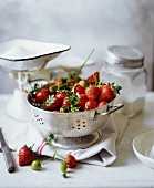 Fresh Strawberries in a Colander with Sugar in a Scale