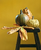Ornamental pumpkins with chestnut leaves on a stool