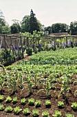 Gemüsegarten mit rustikalen Holzstangen in ländlicher Umgebung