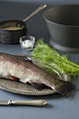 Rainbow trout on a silver platter with dill