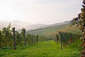 Vineyards near Barolo, Piedmont, Italy