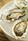 Fresh oysters on crushed ice (close-up)