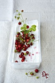 Woodland strawberries in a plastic box