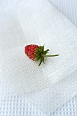 A woodland strawberry