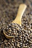 Roasted barley seeds for malt coffee