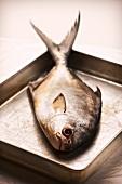 Pompano (Jack fish) on a baking tray
