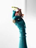 Hand mit Hanschuh hält eine Zwiebel