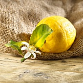 A lemon with a leaf and flower on a hessian sack