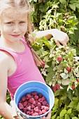 A blonde girl picking raspberries