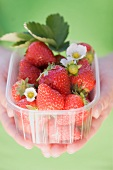Hands holding a plastic punnet of strawberries