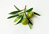 A sprig of green olives