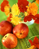 Still life of Calendula flowers and nectarines