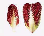 Radicchio and a radicchio leaf