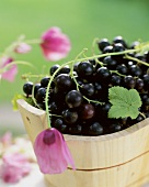 Blackcurrants in a wooden trough