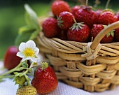 Strawberries in a small basket