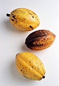 Three cacao fruits