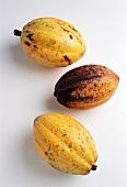 Three cacao fruits