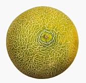 A Galia melon