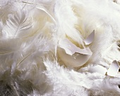 Eggshell lying in feathers