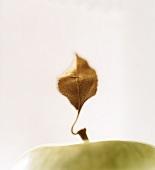 An apple leaf