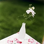 White sweet peas on a table in the open air