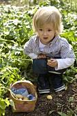 Small boy picking potatoes